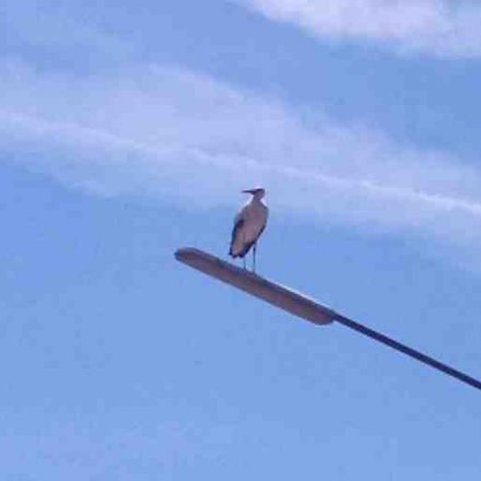 Lonely stork perched on lamp post